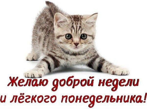 http://forum.zarulem.ws/uploads/201612/post-25756-1482115952-0013.jpg